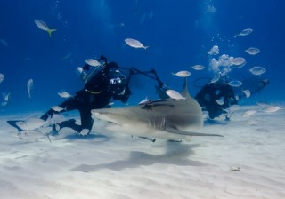 Jonathan photographing Lemon Sharks in the Bahamas Photo by Mark Tarczynski.