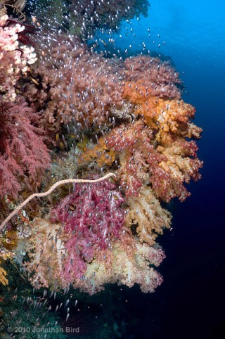 A coral reef in Raja Ampat, Indonesia. Photo by Jonathan Bird.