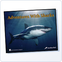 Adventures With Sharks