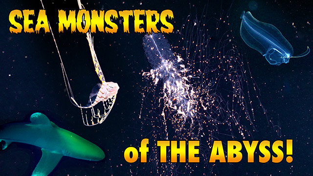 Latest Webisode: Sea Monsters of the Abyss (Blackwater Diving)