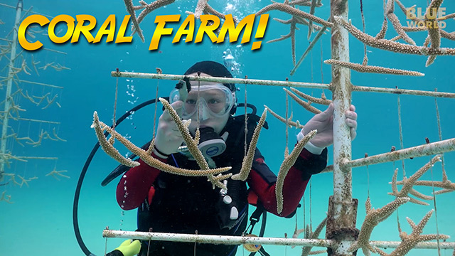 Latest Webisode: Bonaire Coral Farm