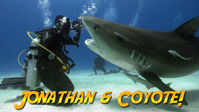 Latest Webisode: Tiger Sharks with Coyote Peterson