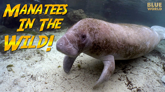 Latest Webisode: Elizabeth and the Manatees