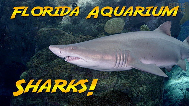 Latest Webisode: Sharks at the Florida Aquarium