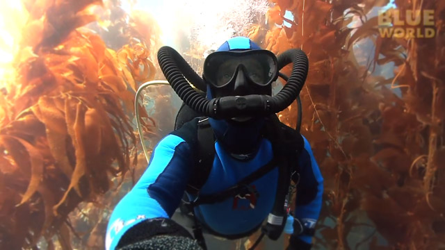 Latest Webisode: Kelp Forests