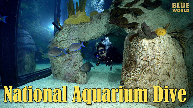 Latest Webisode: National Aquarium Visit
