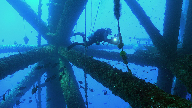 Latest Webisode: Oil Platform Diving!
