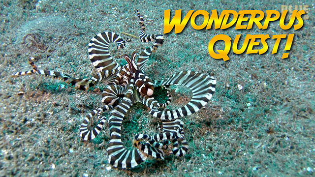 Latest Webisode: Wunderpus Quest