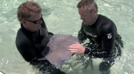 Stingray City with Guy Harvey