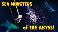 Sea Monsters of the Abyss (Blackwater Diving)