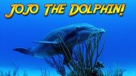 Searching for Jojo the Dolphin