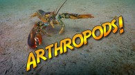 What are Arthropods?