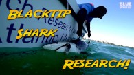 Florida Blacktip Shark Research