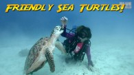 Friendly Sea Turtles