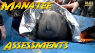Manatee Assessments
