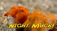 Muck Diving at Night!