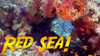 Red Sea Diving Adventure!