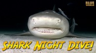 Night DIving with Sharks