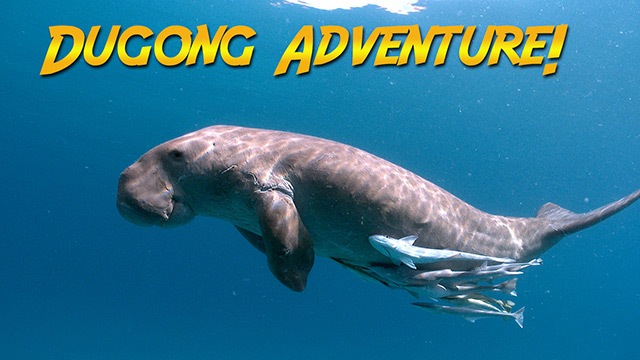 Latest Webisode: Dugongs of the Philippines