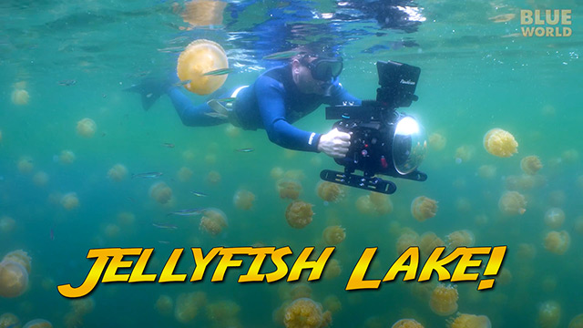 Latest Webisode: Jellyfish Lake Palau