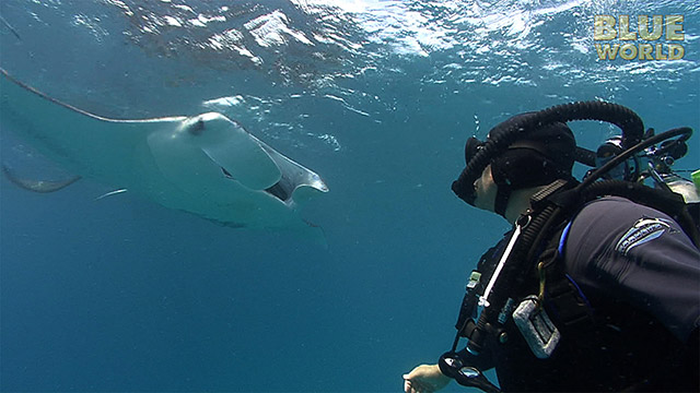 Latest Webisode: Manta Ray Feeding Frenzy!
