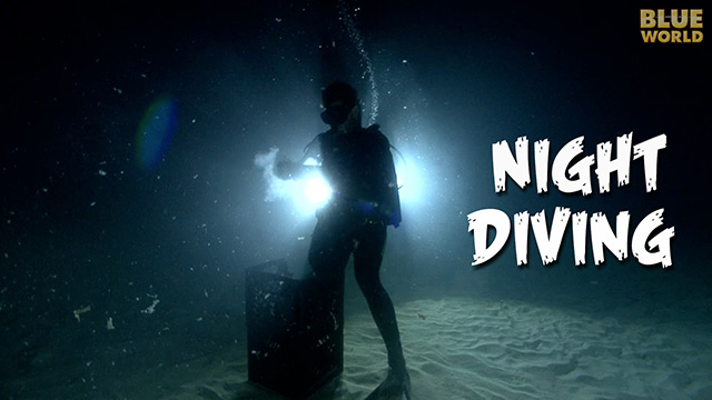 Latest Webisode: Night Diving