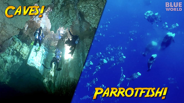 Latest Webisode: Caves and Spawning Parrotfish of Palau!