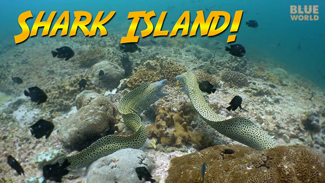 Latest Webisode: Shark Island, Oman
