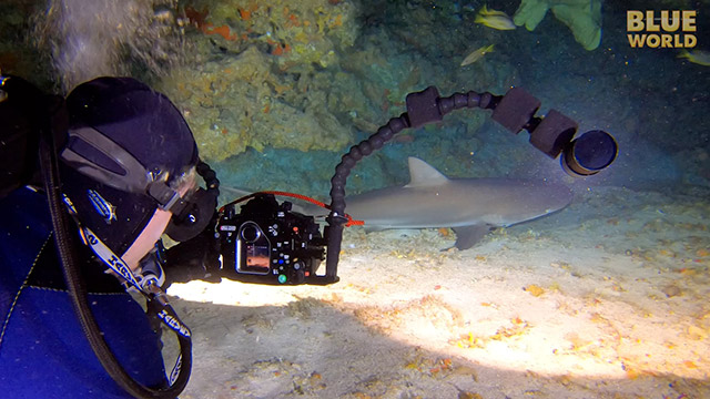 Latest Webisode: Cave of the Sleeping Sharks!